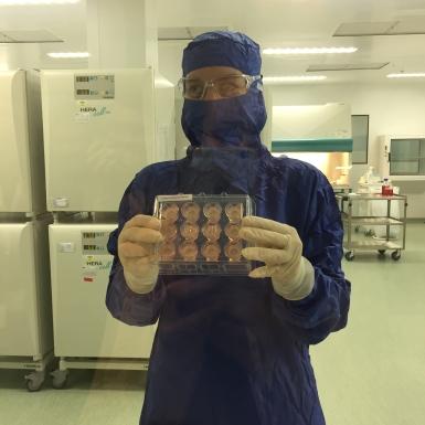 Les cellules de peau sont mises en culture et déposées sur des matrices en collagène